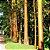 Pau-Mulato ou Escorrega-Macaco ou Pau-Marfim  - Imagem 6