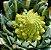 Brócolis Romanesco - kit c/ 8 Sementes - Imagem 2
