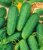 Pepino Híbrido Green Pick - Kit c/ 20 sementes - Imagem 4