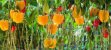 Pimentão Emojigreen Amarelo - Kit c/ 10 sementes - Imagem 3