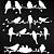 Adesivo - Cartela Birds Pássaros - Imagem 2