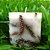Vela Aromática de Cravo e Canela Caamanha - Imagem 4