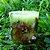 Vela Aromática de Flor de Laranjeira Caamanha - Imagem 1