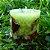 Vela Aromática de Flor de Laranjeira Caamanha - Imagem 2