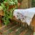 Toalha de Rosto Branca em Renda de Bilros Branca - Imagem 1