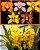IMPERDÍVEL: Kit de Cymbidiuns do Havaí com 5 orquídeas - T4 - Imagem 1