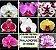 Kit 03: 7 Orquídeas Phalaenopsis + 1 de BRINDE - NBS - Imagem 1