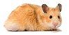 HAMSTERS ANIMAIS VIVOS - Imagem 1