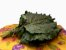 Couve Mineira  - Imagem 1