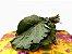 Couve Mineira  - Imagem 2