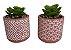 Vaso Decorado com Suculenta Sortido 4885 - Imagem 7