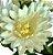 Buque Dalia X5 28CM Branco 06259 - Imagem 2