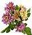 Buque Dalia X5 28CM Rosa Claro Mesclado 06259 - Imagem 1