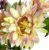 Buque Dalia X5 28CM Rosa Claro Mesclado 06259 - Imagem 5