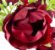 Mini Buque Peonia 30CM Vermelho - Imagem 4