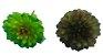 Suculenta 15CM Verde Manchada 06758 - Imagem 2