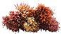 Buque Lírio Mini Rose Outono 32CM - Imagem 4