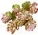 Suculenta Mini Galho Color X5 31CM E/0752 - Imagem 1