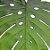 Lugar Americano De Eva Garden Leaf 45x38cm Mesa Posta - Imagem 5