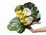 Bouquet de orquídeas e antúrios - Imagem 1