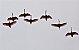 Quadro Decorativo Aves - Imagem 1