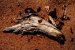 Quadro Decorativo Cavalo - Imagem 1