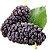 Deliciosa Amora de Árvore Muda Produzindo com 70 cm + Brinde - Imagem 1