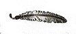 Pena de Metal Para Chapéu Vitrine do Cowboy VCF003 - Imagem 1