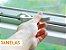 Veda Fresta 6x9 Mm Marrom 6 Metros Comfort Door - Imagem 6