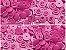 Botão Ritas, Tamanho 12mm, Pacote com 50 unidades, Cor Rosa Choque - Imagem 1
