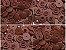 Botão Ritas, Tamanho 12mm, Pacote com 50 unidades, Cor Marrom - Imagem 1