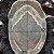 Prótese Capilar Parcial Apollo Hibrida  ( 15 x 20 cm ) #1B Castanho Escuro + Curso de Auto Manutenção Grátis - Imagem 6
