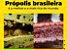 Bellabelha Extrato de Própolis Vermelha 30ml - Imagem 2