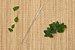 Beegreen Escova Higiênica de Limpeza Para Canudos 1un - Imagem 2