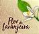 Pomander Sagrado Kit com 3 Perfumes Naturais - Rosas, Flor de Laranjeira e Jasmim - Imagem 7
