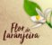 Pomander Sagrado Eau de Parfum Natural Flor de Laranjeira 30ml - Imagem 5