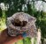 Junibee Embalagem Wrap Reutilizável Tamanho M 1un - Imagem 5