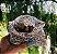 Junibee Embalagem Wrap Reutilizável Kit 3uns - Imagem 6