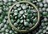 Puravida Spirulina Premium 200 Tabletes Veganos - Imagem 4