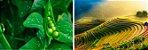 Puravida Veg Protein - Proteína Concentrada de Ervilha e Arroz - Imagem 5