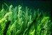 Puravida Vegan Ômega 3 DHA (500mg) - 60 Cápsulas Veganas - Imagem 6