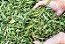 Puravida Adoçante Natural em Gotas Pura Stevia 60ml - Imagem 5