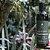 AhoAloe Shampoo 2x1 Equilíbrio Aloe Vera, Tea Tree e Copaíba 270ml - Imagem 3