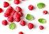 Puravida Probiogurt Frutas Vermelhas - Iogurte Vegano Probiótico - Imagem 5