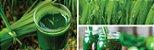 Puravida Supergreen - Suco Verde Premium em Pó 100g  - Imagem 4