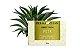 Derma Clean Sabonete Vegetal Pita 100g - Imagem 3