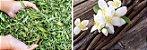 Puravida Adoçante Natural em Gotas Pura Stevia Sabor Vanilla 60ml - Imagem 4