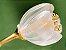 Anel de Ouro 18k com Pedra Flor de Lotus Estilo Trendy - Imagem 3
