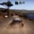 Switch WRC 9 The Official Game - Imagem 5