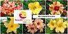 MIX com 5 sementes de flores simples amarelas - Rinoa Chen - Imagem 1